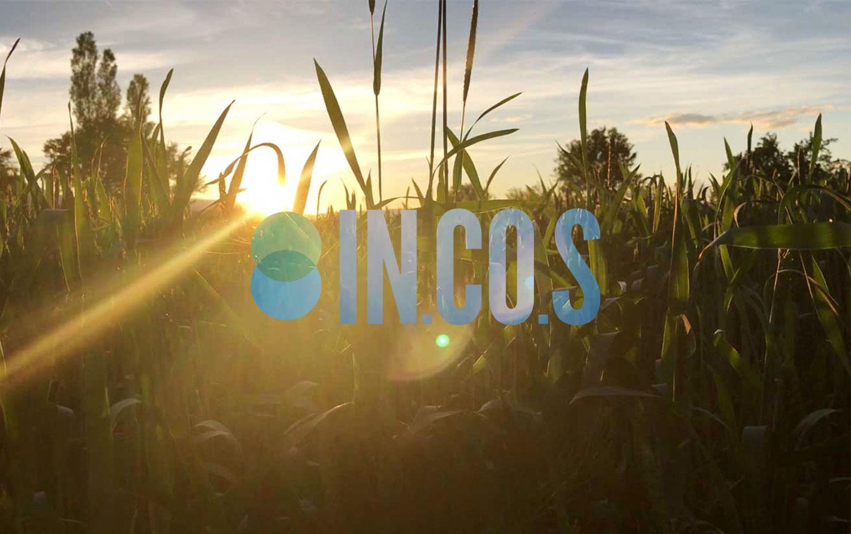 INCOS Consulting - Branding / Web Design / Comunicazione